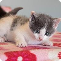 Adopt A Pet :: Aurora $125 - Seneca, SC