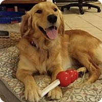 Adopt A Pet :: Dixie - Murdock, FL