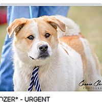 Adopt A Pet :: Dozer - ADOPTED! - Zanesville, OH