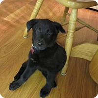 Adopt A Pet :: Nala - Grafton, WI