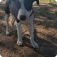 Adopt A Pet :: Sam - Eustace, TX