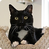 Adopt A Pet :: Prime - Gaithersburg, MD