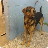 Adopt A Pet :: A498577 - San Bernardino, CA