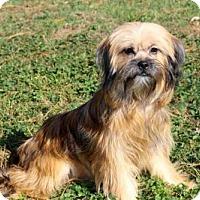 Adopt A Pet :: FANTASTIC FAYE - richmond, VA