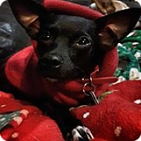 Adopt A Pet :: Callista - Tijeras, NM