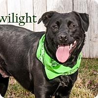 Adopt A Pet :: Twilight - Hamilton, MT