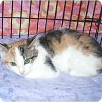 Adopt A Pet :: Miss Tickles - Colmar, PA