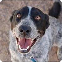 Adopt A Pet :: Lil Girl - Golden Valley, AZ