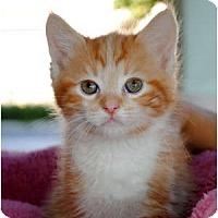 Adopt A Pet :: Cheddar - Palmdale, CA