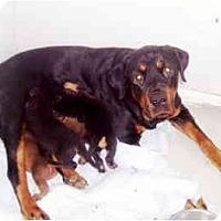 Adopt A Pet :: Pandora - Scottsdale, AZ