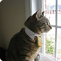 Adopt A Pet :: MURRY - Madison, AL