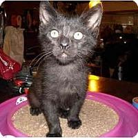 Adopt A Pet :: Lexi - Irvine, CA