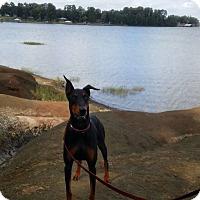 Adopt A Pet :: Penny - killeen, TX