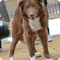 Adopt A Pet :: Airel (Danny) - Bellevue, NE