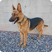 Adopt A Pet :: Karl. Canine Good Citizen - Phoenix, AZ