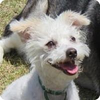 Adopt A Pet :: Joy - Santa Ana, CA