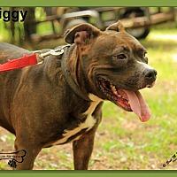 Adopt A Pet :: Piggy - Sarasota, FL