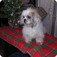 Adopt A Pet :: Crystal - Yucaipa, CA