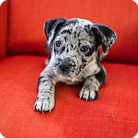 Adopt A Pet :: Agnes - Los Angeles, CA