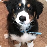 Adopt A Pet :: Benson - Norwalk, CT