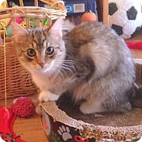 Adopt A Pet :: Ginger - San Leandro, CA