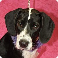 Adopt A Pet :: Alice - Jackson, MI
