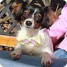 Adopt A Pet :: Becky-ADOPTED!