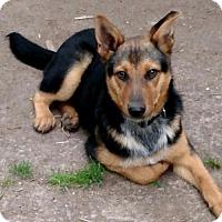 Adopt A Pet :: Quincy - Glastonbury, CT