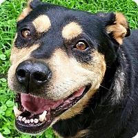 Adopt A Pet :: China - Kansas City, MO