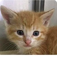 Adopt A Pet :: Rob - Springdale, AR