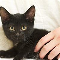 Adopt A Pet :: Chloe - Sioux Falls, SD