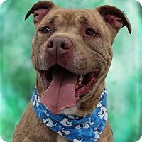 Adopt A Pet :: Bruce - Cincinnati, OH