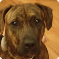 Adopt A Pet :: Dutchess - Cincinnati, OH