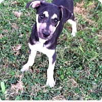 Adopt A Pet :: Buttercup - Buffalo/Rochester, NY