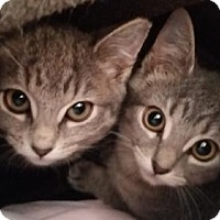 Adopt A Pet :: Tribby - Satellite Beach, FL