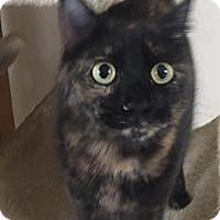 Adopt A Pet :: Miss Ellie - Port Charlotte, FL