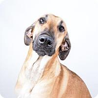 Adopt A Pet :: Hercule - Decatur, GA
