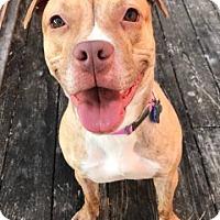 Adopt A Pet :: Mariah - Warrenville, IL