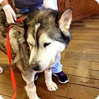Adopt A Pet :: Goliath - Leesburg, VA