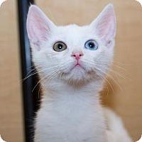 Adopt A Pet :: Dondi - Irvine, CA