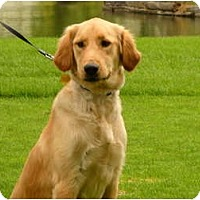 Adopt A Pet :: Girl - Denver, CO