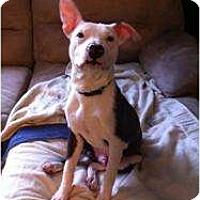 Adopt A Pet :: Auggie - Killen, AL