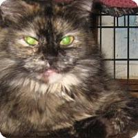 Adopt A Pet :: Astrid - Dallas, TX