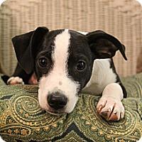 Adopt A Pet :: Fisher - Hamburg, PA