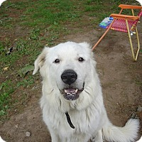 Adopt A Pet :: Sweetie Pie (aka Libby - Lee, MA