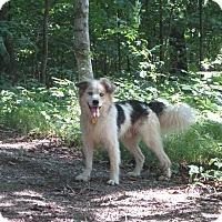 Adopt A Pet :: Peco - Cokato, MN