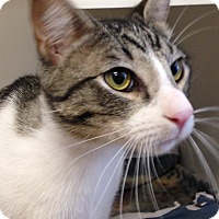 Adopt A Pet :: Barrow - Mission Viejo, CA