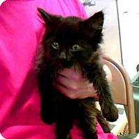Adopt A Pet :: A265072 - Conroe, TX