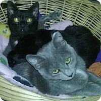 Adopt A Pet :: Charlie - Witter, AR