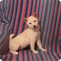 Adopt A Pet :: PHALEN - WOODSFIELD, OH
